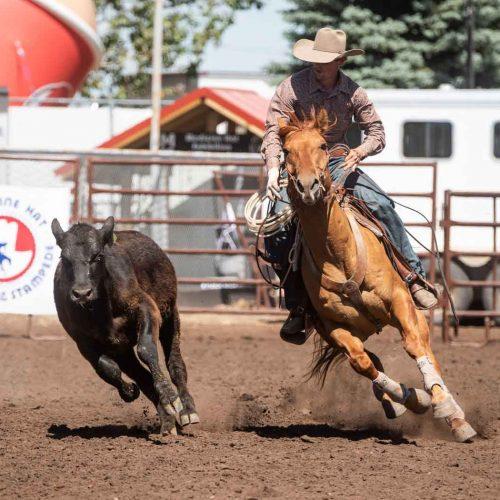 ranchhorse-2