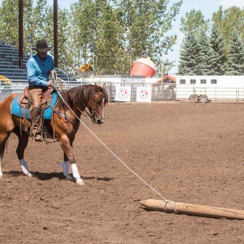 ranchhorse-3